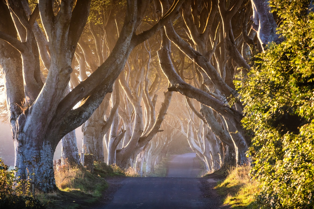 The Dark Hedges | Game of Thrones location | visit the Dark Hedges during your stay at Laurel Villa Guest House, Magherafelt
